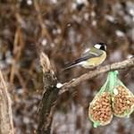Így készüljünk a téli madáretetésre