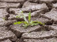 Történelmi aszály sújtja Belgiumot, több településen vízhasználati korlátozást vezettek be