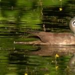 Elképesztően ritka madárra bukkantak, ráadásul épp fészkelt