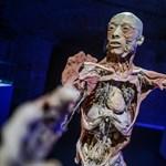 Hullagyalázás miatt feljelentették a BODY Kiállítást – a szervezők válaszoltak