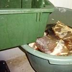 Rothadó húshalmokat találtak a Nébih ellenőrei egy Pest megyei kistermelőnél – videó 18+