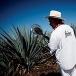 5 dolog a mexikóiak kedvencéről