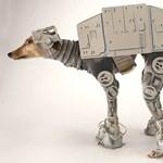 A nap kutyája: Csontos Mello