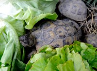 Elfogták a nőt, aki agyonütötte az állatkert teknősét