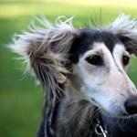 A nap kutyája - Fifi