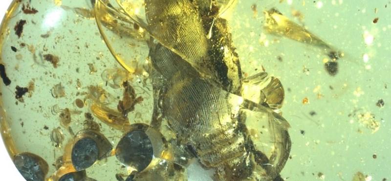 Szenzációs lelet: szülés közben őrzött meg egy 99 millió éve élt csigát egy borostyánkő