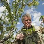 Eddig több mint ezer gazdát ért fagykár