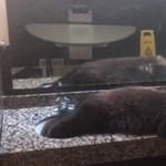 Női mosdóban lazult egy medve Montanában – videó