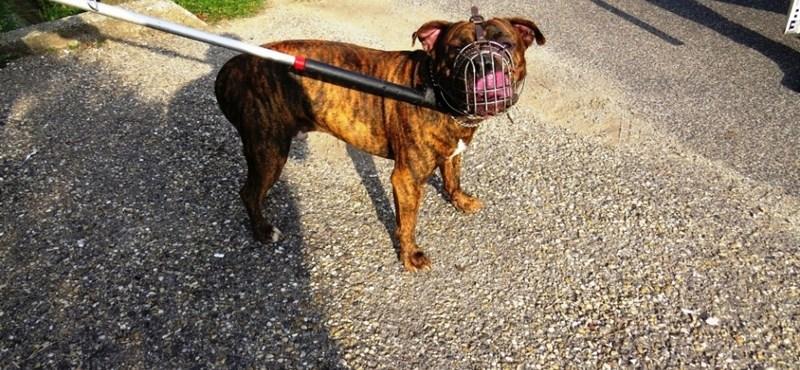 Kutyafalka terrorizálja a lakótelepen élőket Várpalotán