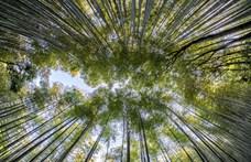 Az erdők méretével is sereghajtó Magyarország az EU-ban