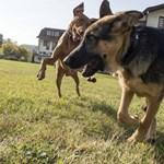 Mérgezett kolbászt találhattak egy pesti kutyafuttatónál