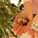 Milyen vitaminokra van szükségünk télen?