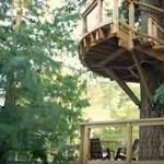 Felküldi a fákra a munkavállalóit a Microsoft – videó