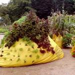 3 sokat virágzó dísznövény otthonra