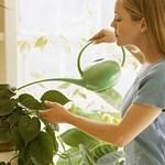 Szép növényeket akar? Figyeljen arra, hogy milyen vízzel locsol!