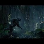 Egész jónak tűnik a szuperlátványos új Tarzan-film – előzetes