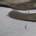 Fotók: sosem volt még ilyen alacsony a Tisza vízállása