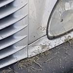 A nap fotói: Nem kímélték az autókat a piliscsabai fűkaszások