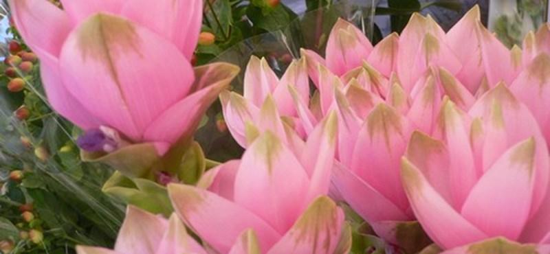 Kurkuma - Egzotikus dísznövény modern lakásokba és kertekbe