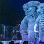 A hologramcirkuszban nem szenved az elefánt