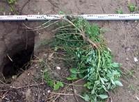Ötvencentis alagutat talált a határzár alatt a rendőrség