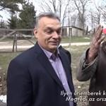 A kapatos kukás után újabb fura figurával találkozott Orbán
