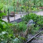 Van egy jó hírünk azoknak a budapestieknek, akik locsolnák a kertjüket a kánikulában