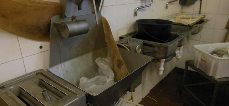 Egérrágta disznósajt, szennyvíz a padlón: undorító húsboltot zárattak be Peresztegen – fotó, videó