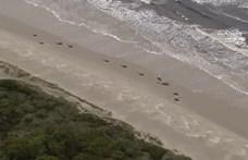 380 delfin pusztult el Ausztrália partjainál