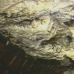 Gigantikus zsírhegyet bányásztak ki egy csatornából - fotó, videó