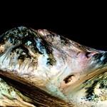 Tömítésgond miatt csúszik a következő Mars-misszó
