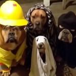 Talán ez a legcukibb Halloween-videó, amit ma láthat