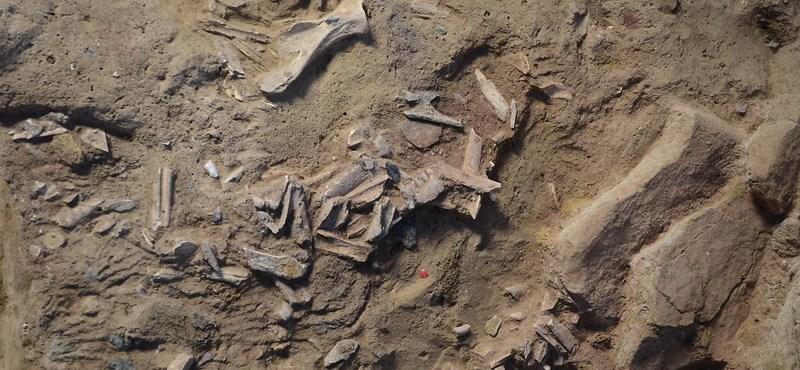 Őskőkori hűtőszekrényt találtak régészek Ausztriában