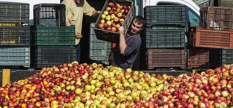 A lengyelországi havazás segíthet a vergődő magyar almatermelőkön
