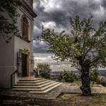 Egy pécsi mandulafa a magyar induló az Európa Fája versenyen