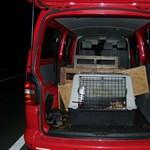 Fotó: Víz nélkül, dobozba zsúfolva vitte a kiskutyákat egy olasz férfi
