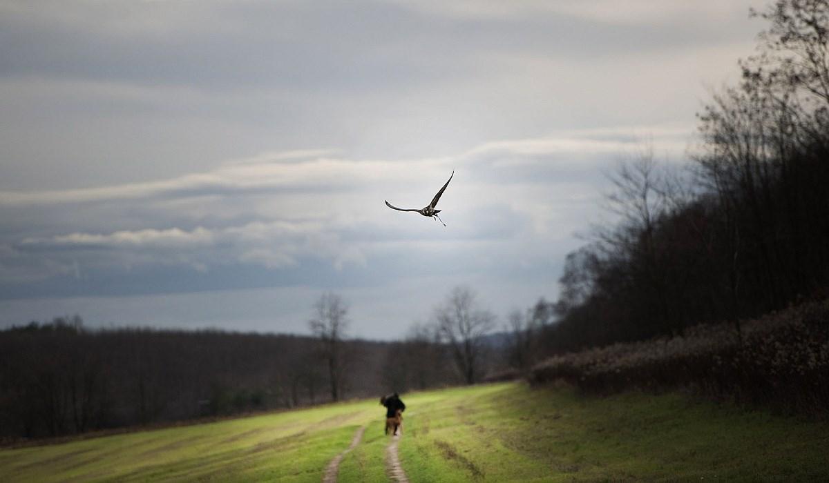 Vadásszon Ön is madárral! - Nagyítás-fotógaléria