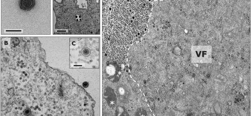 Egy eddig ismeretlen vírusra bukkantak egy brazil tóban