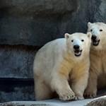 A fővárosi állatkert új jegyvásárlási formát indított