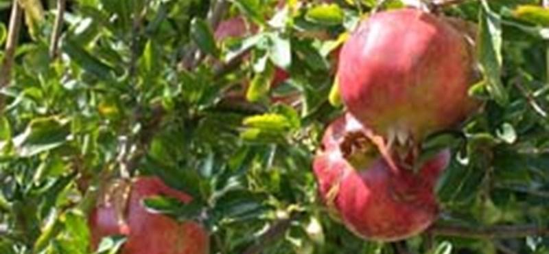 """Sneaky roadblocks show their despair for apple growers """"width ="""" 800 """"height ="""" 370"""