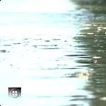 Habzó, bűzös trutyi lebegett a Duna felszínén Dunaújváros közelében