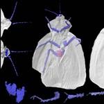 Őscsótányok  virtuális fosszíliáját készítették el