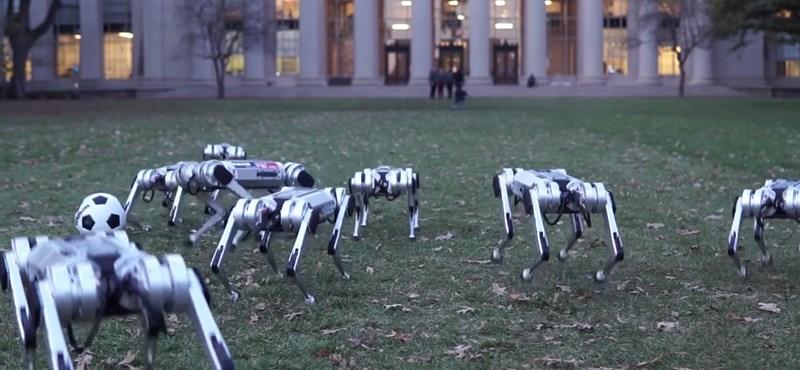 Zseniális videó: Ilyen, amikor a mérnökök viszik le a kutyát sétálni