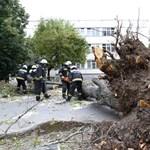 Fotó: Ez a fa dőlt egy egy miskolci iskolásra