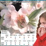 Így lehet jobb az allergiásoknak a lakásban