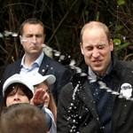 Vilmos herceg olyat kapott az arcába, amire nem számított