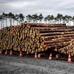 Kutatók szerint összefüggés van a fakitermelés és a járványok kialakulása között