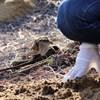 Hajdúsámsoni kutyatetemek: a gyepmester állítja, tucatnyi állatott temetett el ott