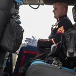 Hősként búcsúztatott egy bombakereső kutyát az amerikai hadsereg