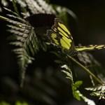 Csak idén több mint 500 új fajt azonosítottak brit kutatók